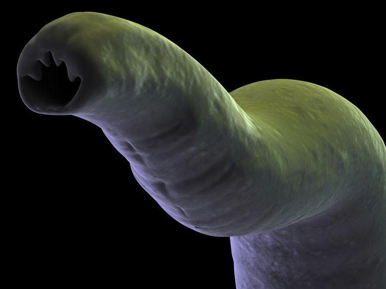 De mijnworm in al zijn glorie