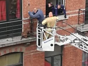 Un chien enfermé sur un balcon pendant la tempête secouru à Saint-Gilles