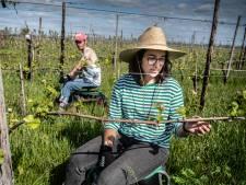 Van de bar naar de akker: horeca- en festivalwerkers nu aan de slag bij de boer
