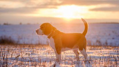 Hond schiet baasje dood tijdens jachtpartij