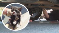 'Motorprobleem' blijkt een nieuwsgierige kitten te zijn