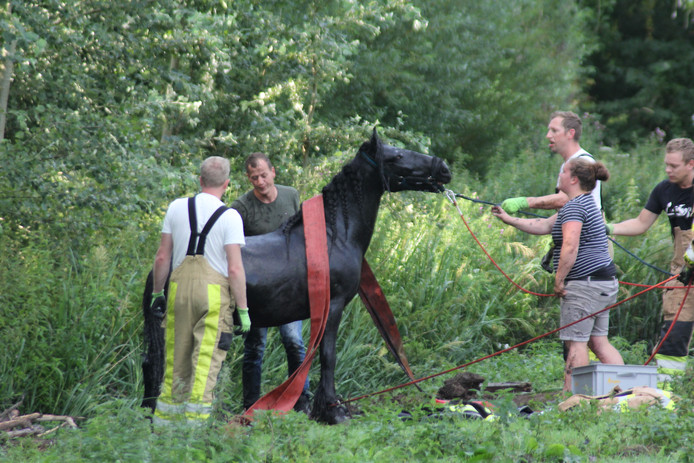 De redding van het paard bij Cantecleer.