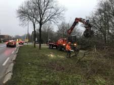 Bomenstrijd Heerderweg is ten einde