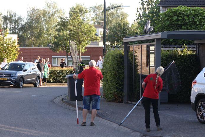 Reiger die in visdraad vastzit laat zich niet vangen door hulpverleners nabij De Voetboog in Boxtel.