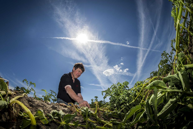 ILO waarschuwt dat vooral de landbouwsector door hittestress zal worden geraakt.