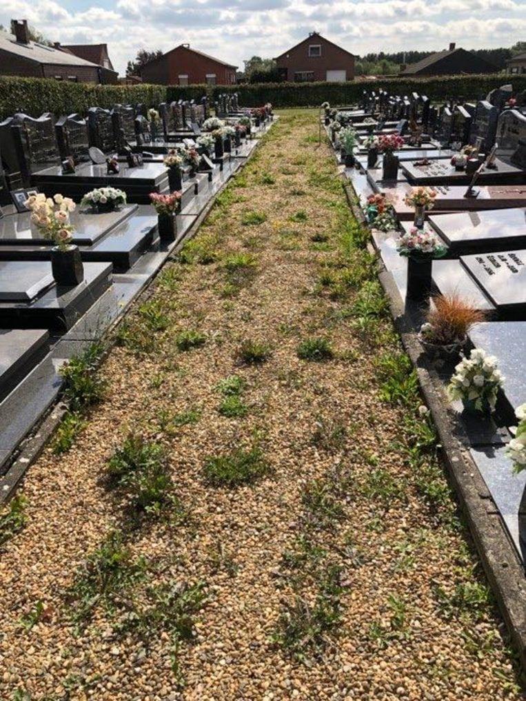 Onder meer op de begraafplaast van Schoonderbuken tiert het onkruid weelderig.