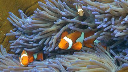 Australië legt half miljard op tafel voor herstel van Great Barrier Reef