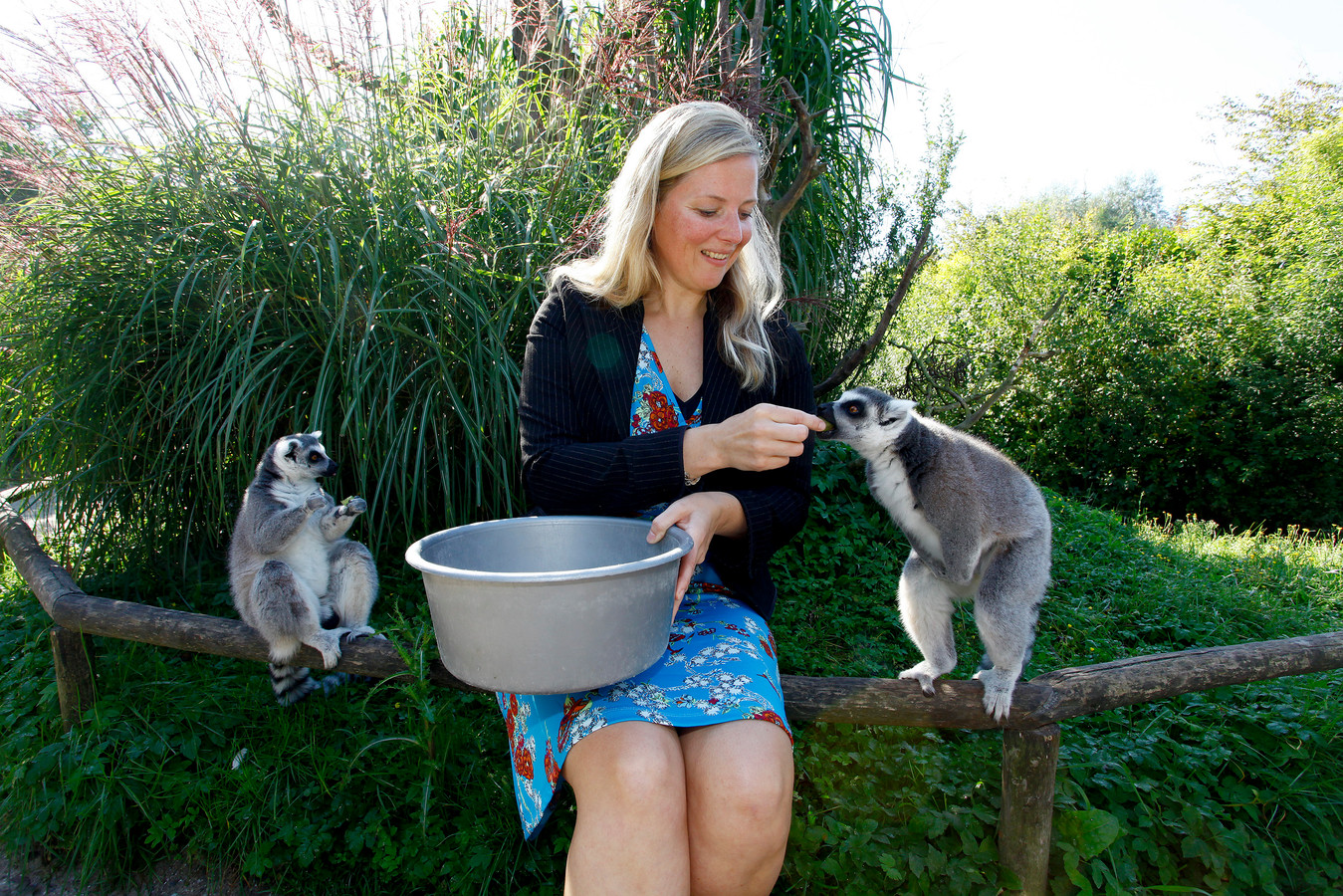 Bezoekers van ZooParc Overloon kunnen al langer heel dicht bij de ringstaartmaki's komen.