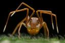 'Face of Deception', India. Winnaar in de categorie Animal Portraits. Ripan Biswas fotografeerde een kolonie rode weversmieren toen hij dit enigszins vreemde individu zag. Het kan het gezicht van een mier hebben, maar bij nadere inspectie ontdekte Ripan dat het een mieren nabootsende krabspin was.