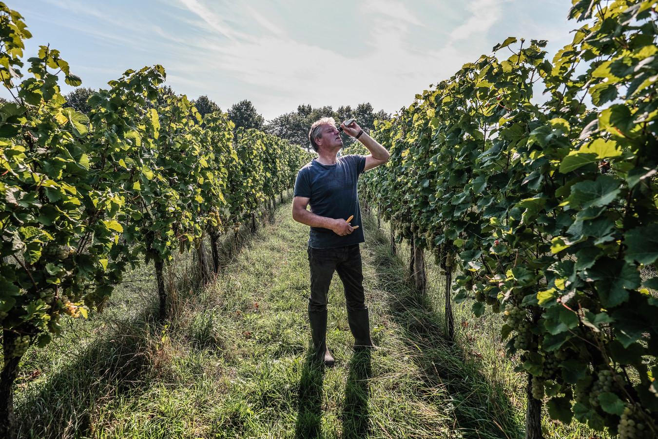 Leon Masselink test het suikergehalte van de druiven.