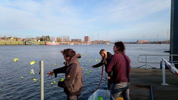 Onderzoekers werpen fluogeel plastic in de Schelde. Gelukkig wel met een wetenschappelijk doel.