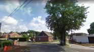 Iconische boom Heidehuizen moet niet gerooid worden