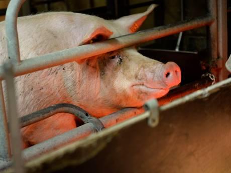 Rijk trekt miljoenen uit voor aanpak van varkensgeur