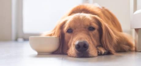 Renkum gaat alle deuren langs op zoek naar honden waarvoor niet is betaald