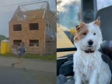 Le coureur qui a poignardé un chien à mort se défend