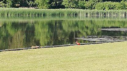 Rode Ibis gespot in Park van Tervuren