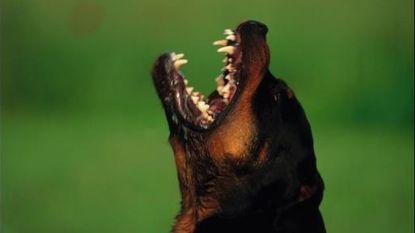 Inbreker verkracht Rottweiler