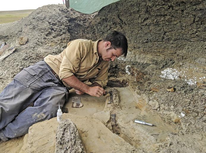 Doctoraal onderzoeker van de University of Kansas, Robert DePalma, aan het werk op de site.
