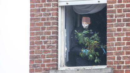 Twee containers met 1.250 wietplanten gevuld uit woning aan op- en afritten E40 in Ternat