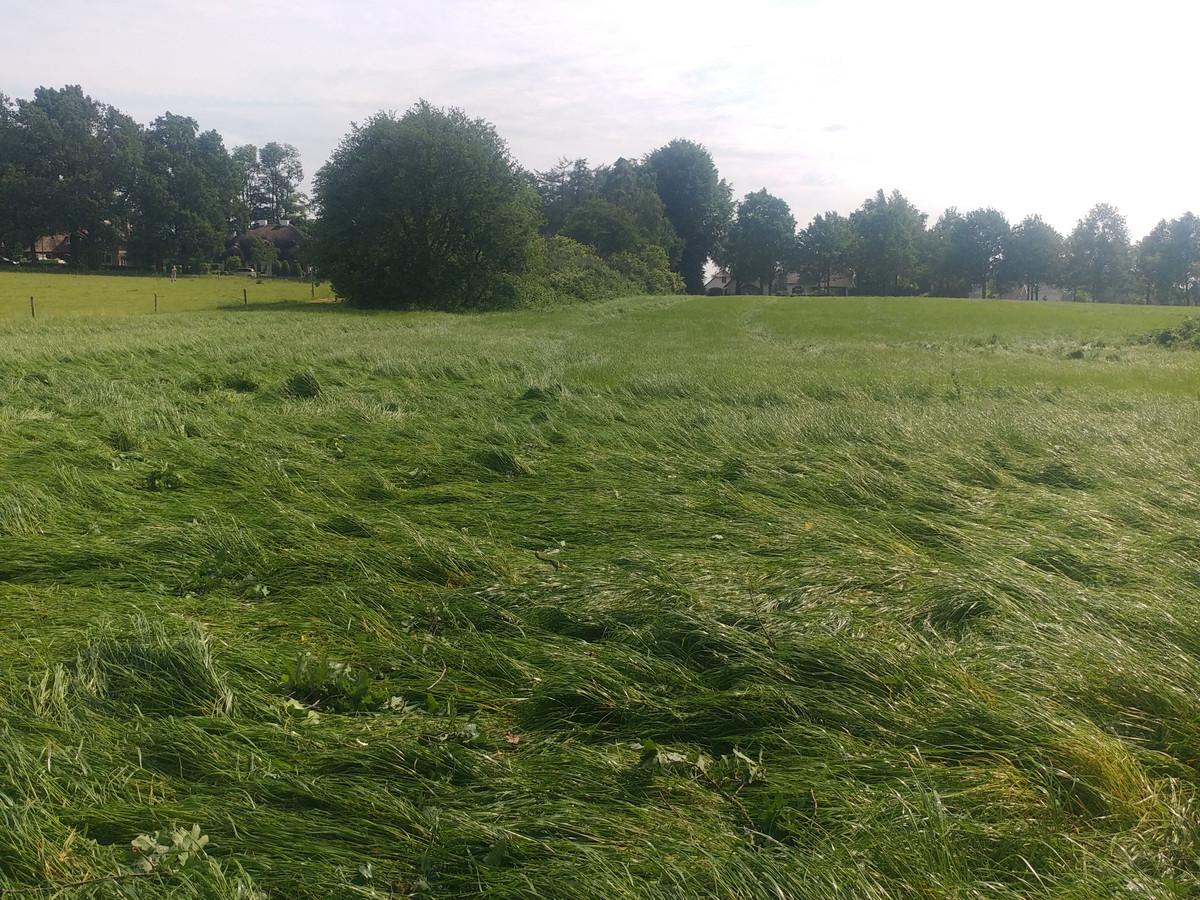 Kortgeslagen gras in het spoor van de tornado