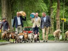 Herder Lammert en hond Tim sturen schapen en geiten naar Haringparty