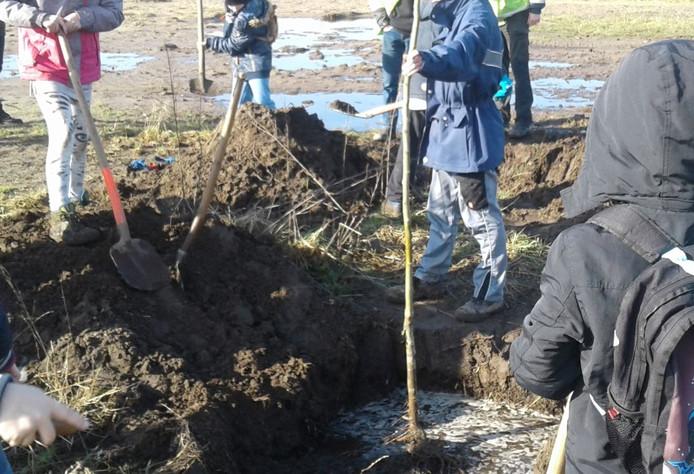 Bomen planten als alternatieve straf is een van de voorstellen van de jeugdgemeenteraad van Maasdriel.