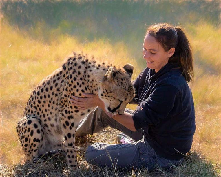 Kim Hiltrop aait een cheeta.