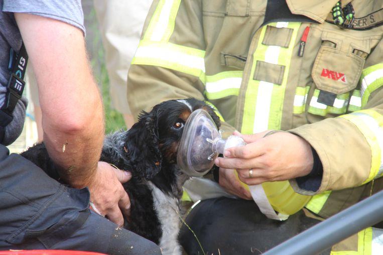 Brandweer redt het hondje Tommy uit woning waar keukenbrand ontstaat
