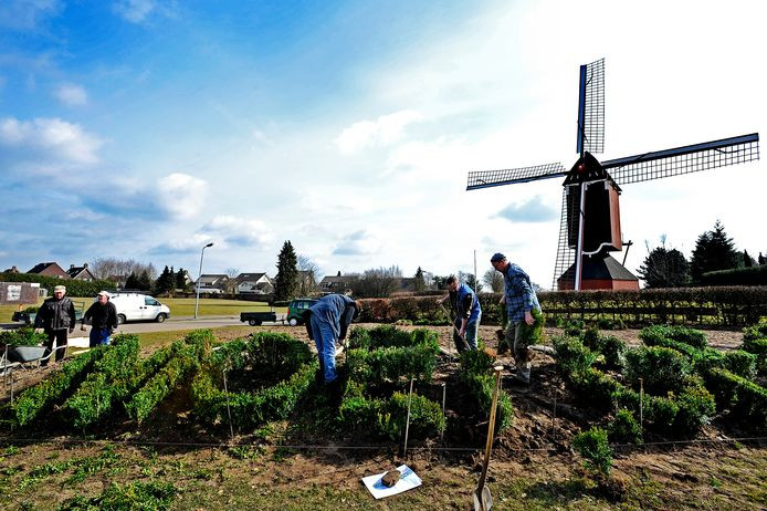 In 2011 kreeg de Moergestelse molen in zijn voortuin een welkomstgroet in de vorm van een buxushaag.