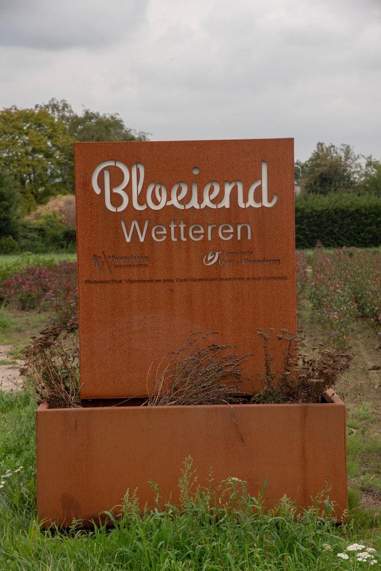 Eén en al dorre planten in Wetteren.