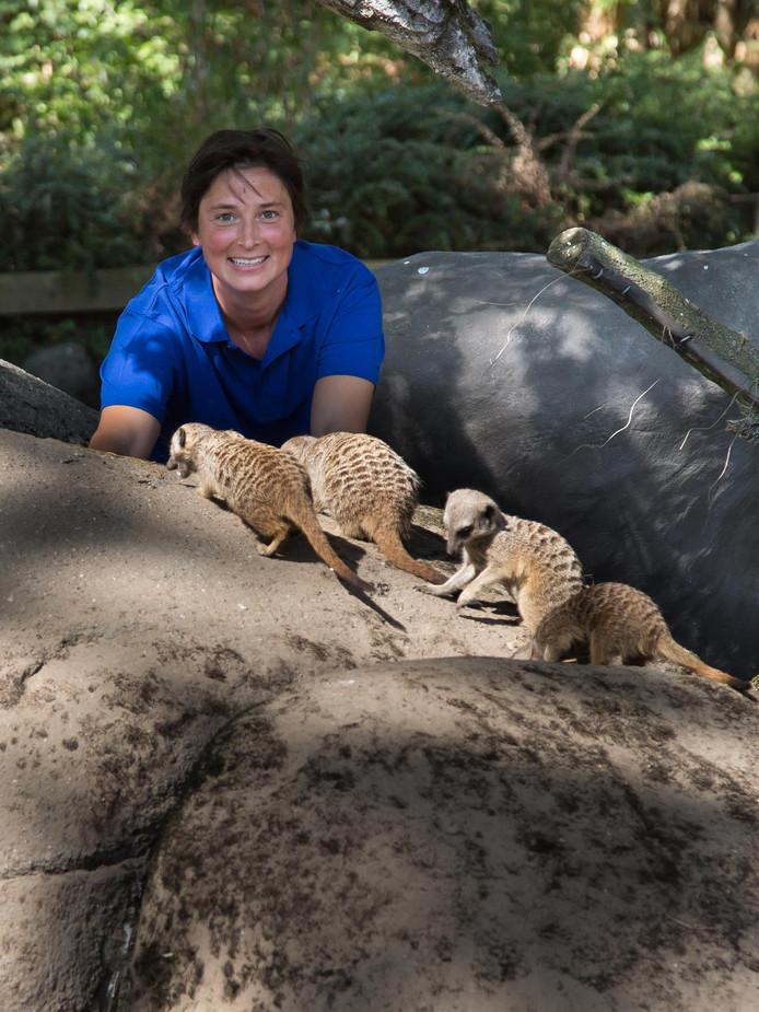 Biologe Constanze Mager van Burgers' Zoo met stokstaartjes.
