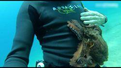 Overdreven vriendelijke octopus zuigt zich vast aan duiker