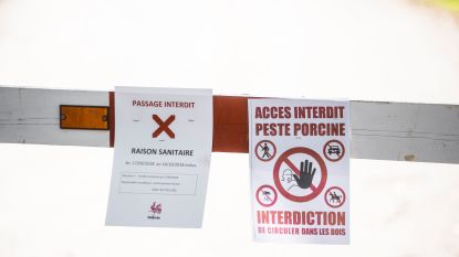 Deel Frans-Belgische grens afgesloten om Afrikaanse varkenspest in te dijken