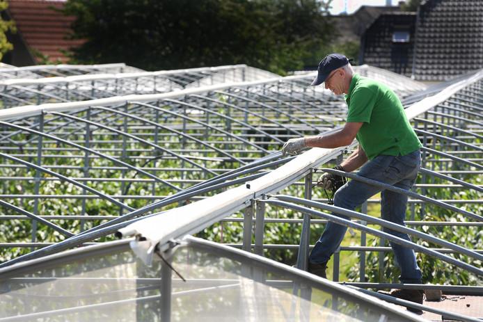 Willem Budding verzegelt het zeil boven zijn kersenboomgaard nu het seizoen is afgelopen.
