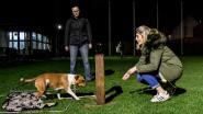 Paws & Friends geeft nuttige tips over honden houden