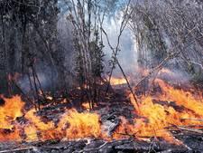 Natuur droogt op: kans op brand stijgt