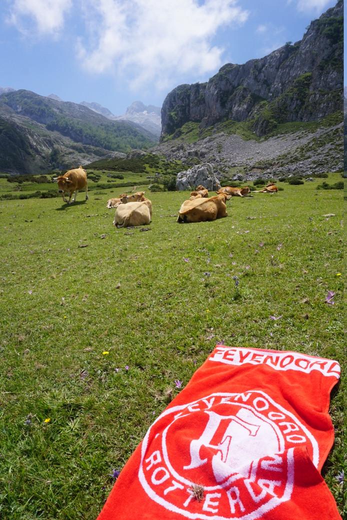 In de bergen van Spaans Baskenland legde Jaap van Hoek zijn handdoek neer. Helaas staat hij er zelf niet op, want ,,die koeien wilden geen foto maken'', zo meldt de Rotterdammer vrolijk.
