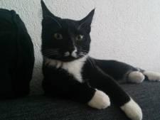 'Je hoort verhalen van katten die na een hele tijd weer terugkomen'