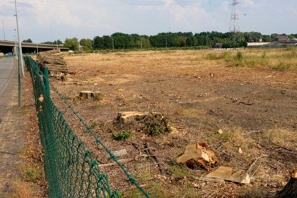 Negen bomen werden gekapt op het terrein van Uplace.