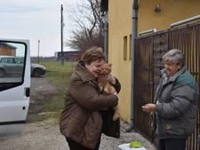 Hartverwarmend: Kat per ongeluk in Nederland, eindelijk terecht bij baasje
