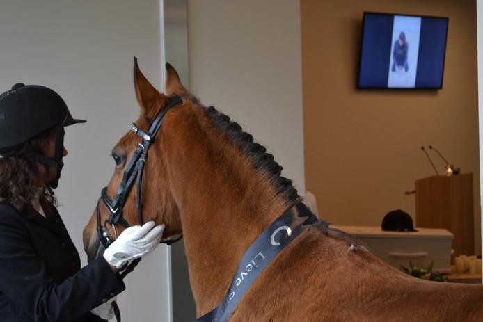 Het paard, met rouwlint om de nek, vlakbij de plaats waar afscheid wordt genomen van de overledene.