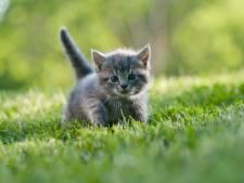 Vijf maanden met uitstel voor man die kat doodde en uit het raam gooide, geen levenslang dierenverbod uitgesproken