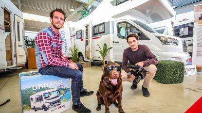 Brugse labrador wordt acteur en wil duizenden straathonden in Servië redden