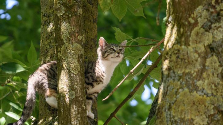 Jong katje na moeilijke manoeuvre door brandweer uit boom gered in Breda