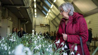 Sneeuwklokjes lokken 1.200 bezoekers naar Arboretum