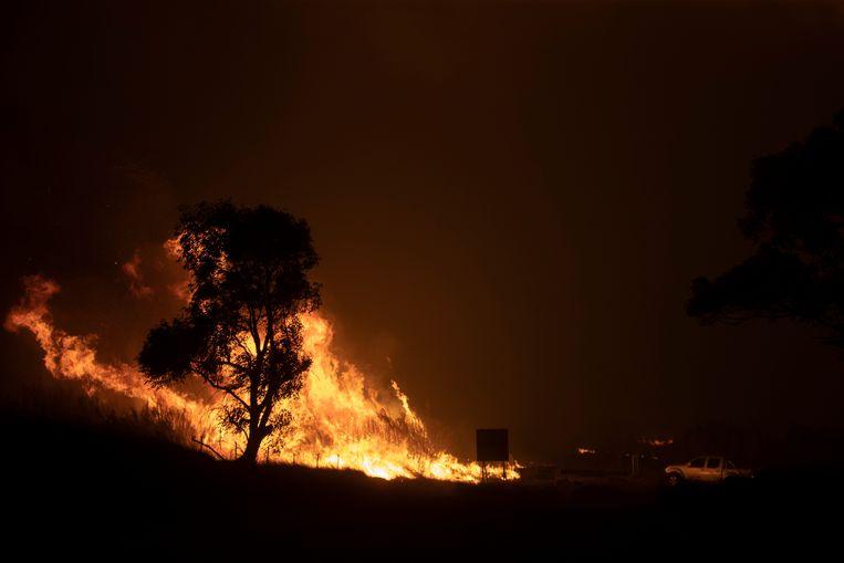 Een bosbrand in Canberra, Australië.  Beeld Getty Images