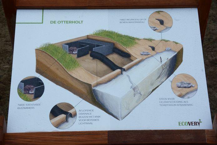Een doorsnede van de 'otterholt' waarin de dieren kunnen rusten.