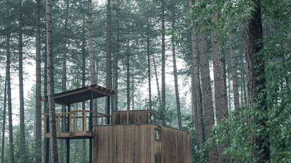 Kamperen tussen de bomen in Scandinavische stijl