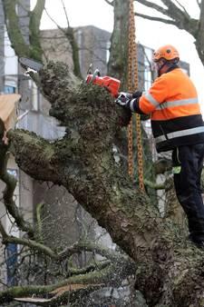 Jankende kettingzagen vellen vele bomen aan de Bergse Rijtuigweg
