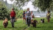 Speel- en wandeldag Doggy Fun Day steunt opvang van weeshondjes